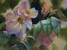 """Sally Homes Rose"" watercolour by Svetlana Orinko"