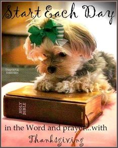 Start Each Day Thankful morning good morning morning quotes good morning quotes Morning Blessings, Morning Prayers, Morning Images, Good Morning Quotes, Photo Humour, Puppy Quotes, Lancaster Puppies, Morning Morning, Gif Animé