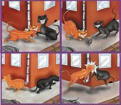 коты и мышка
