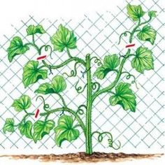 J. Bordier - l'ABC du potager - Rustica éditions Potager Garden, Seed Starting, Horticulture, Vegetable Garden, Beautiful Gardens, Plant Leaves, Herbs, Flowers, New York