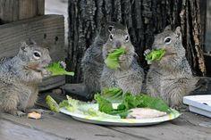 Lunch time! Via Precious World -fb