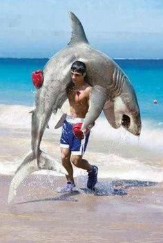 Shark Week may be several months from now, but who cares when you have shark memes to laugh at. Humor Satirico, Great White Shark, Funny Bunnies, Funny Moments, Funny Photos, Funny Images, The Funny, Funny Animals, Funniest Animals