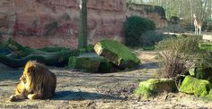 """Besuch des """"Erlebnis Zoo Hannover"""""""