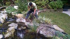 Garden Pond, Water Garden, Pond Netting, Spring Clean Up, Pond Cleaning, Pond Maintenance, Backyard Ponds, Pond Ideas, Falling Leaves
