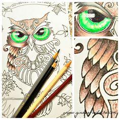 Atelier Gina Pafiadache: Detalhes da Coruja do livro Floresta Encantada