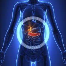 اين يقع البنكرياس في جسم الانسان Tim Với Google Bai Tập Giấm đui