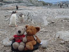 The biggest problem we had in Antarctica was that the penguins kept photobombing TA and Wally.  This little fellow really thought it was funny to do so!