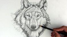 Las Mejores 38 Ideas De Como Dibujar Animales Realistas Como Dibujar Animales Cómo Dibujar Dibujos De Animales