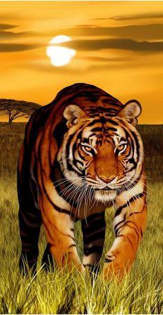 Bengal Cat Gallery - Cat's Nine Lives Bengalischer Tiger, Bengal Tiger, Bengal Cats, Tiger Artwork, Tiger Painting, Tiger Wallpaper, Animal Wallpaper, Wildlife Wallpaper, Beautiful Cats