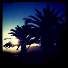palms at nora bay