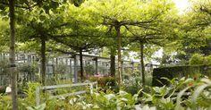 Akkurat gezogene Bäume verleihen dem Garten ein markantes Gesicht. Wir zeigen Schritt für Schritt, wie man eine Dach-Platane im Sommer zurückschneidet und welches Werkzeug dabei benötigt wird. Außerdem stellen wir weitere attraktive Dach-Spalierbäume vor.