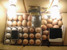 A few other links to check out for incubating and Care of little ones!    Hatching 101~ ...