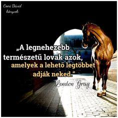 Equestrian Quotes, Horse Riding, Funny Texts, Horses, Random, Memes, Meme, Funny Text Messages, Horse