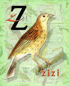 Z for ZIZI.Alphabet print Decor Cirl bunting par BerniesArtPrints