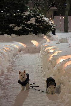 アイスキャンドルが並んでいる散歩道で.......さぶぅ(((*゚艸゚)))=3。Ice candles lighting the way for the doggies.