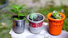 21 Tiny Gardening Projects So Small It's Hard to Believe They're Actually Alive!
