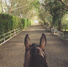 theawkwardblack3questrian: samantha—swan: Best place on earth- Wellington 2014