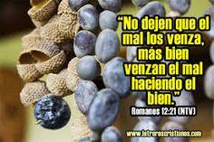 Blueberry, Fruit, Food, Texts, Romans 12, Bible, Friendship, Berry, Eten