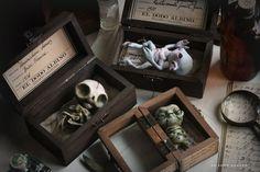 Three boxed specimens from El Dodo Albino Specimen Collection. Halloween Clay, Halloween Night, Halloween Crafts, Halloween Drawings, Polymer Clay Kunst, Polymer Clay Crafts, Polymer Clay Painting, Clay Monsters, Clay Box