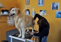 Tips on grooming your dog  #examinercom