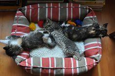Sweet little kittens