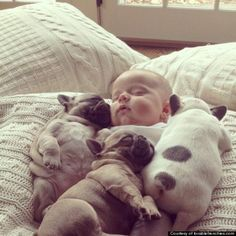 The 11 Most Adorable Pictures Of A Baby Covered In French Bulldog Puppies Ever Taken Omg cuteness overload! So Cute Baby, Adorable Babies, Cute Baby Animals, Funny Animals, Sleepy Animals, Small Animals, Small Dogs, I Love Dogs, Puppy Love