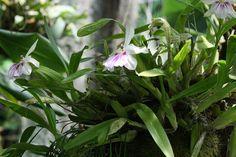 Información sobre orquídeas en http://www.elhogarnatural.com/orquidaceas.htm