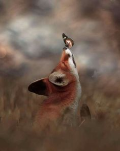The fox - one of the most amazing animals there is! Submit pictures, questions, or anything related to foxes. Cute Little Animals, Cute Funny Animals, Funny Cats, Nature Animals, Animals And Pets, Forest Animals, Beautiful Creatures, Animals Beautiful, Cute Fox