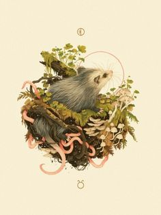"""Ostara"", in which baby opossum is birthed from... 