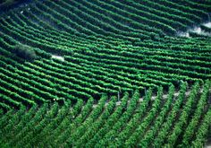 Vineyards of Vinchio in the Monferrato wine zone of Piemonte, Italy