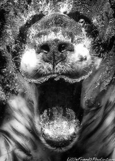Seth Casteel Underwater Dogs