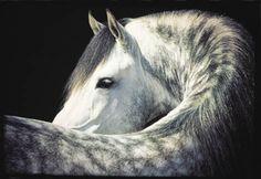 Horse-Canada: Featured Stallion 'Normando' Poster - Robert Vavra