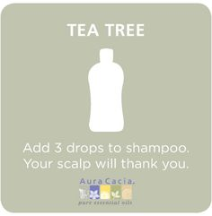 tea tree natural hair care