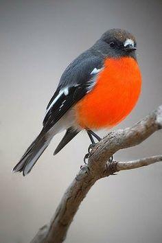 by birdsaspoetry - Pixdaus