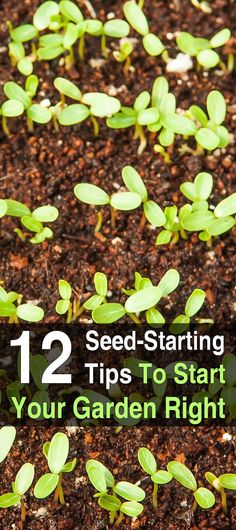 The benefits of growing your own garden are numerous, but the first step to a good garden is the seeds. Here's how to start them.