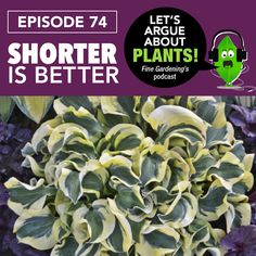 "Danielle and Steve discuss why short plants are important to good design and exactly what dimensions qualify a plant as ""short."""