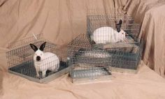 Top of the line rabbit carrier cages. #rabbitcarriercages #rabbithutch