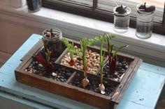 Indoor Compost Garden: Put your kitchen scraps to work! Turn your veggie leftovers into a dreamy indoor compost garden.