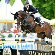 Plot Blue KWPN stallion