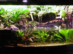 Low Tech Tank Show-and-Tell (low tech can be lush, too! =) - Page 2 - The Planted Tank Forum