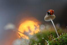 Macro photography by Vadim Trunov.