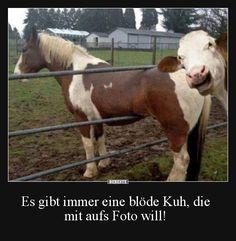 Es gibt immer eine blöde Kuh, die mit aufs Foto will! | Lustige Bilder, Sprüche, Witze, echt lustig