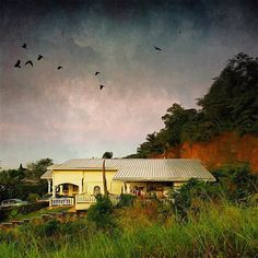 #procamera9 #skrwt #mextures #mexturesapp #stackablesapp #icolorama #distressedfx #landscape #landscapelovers #landscape_lovers #landscape_specialist #trinidad #trinidadian #northernrange #westindies_pictures #ig_caribbean #ig_trinidadtobago #nature #naturelovers #visionographer #iphoneacademy #iphoneography #mobiography #mobilephotography #art #artistic_flair #painting #illustrious_art #classic by visionographer