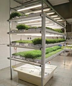HYDROPONIC MICROGREENS- HEALTHY, TASTY AND FUN!