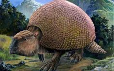 ice age mammals - Glyptodonts...much larger relatives of the modern armadillo