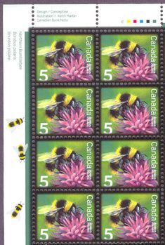Buzzy Busy Bees - Honey Bee, Beekeeping, Hexagon Honeycombs - Stamp Community Forum