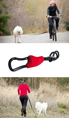 Read these fun ways to get fit with your dog!