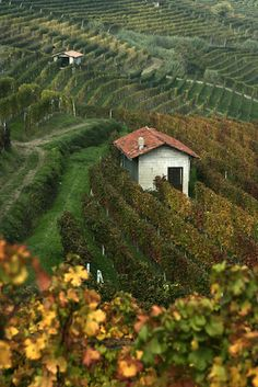 "Barolo vineyards in Piemonte, Italy. ""2010 is a vintage for Nebbiolo lovers"" A Classic in the Making: Barolo Wine"