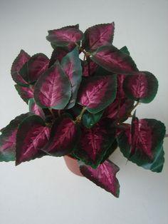 Buntnessel Coleus Topfpflanze Kunstblume künstliche Pflanze Zimmerpflanze Deko