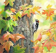 Fall Downy - Downy Woodpecker  Original Painting by Susan Bourdet